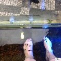 Experiencing A Fish Pedicure In Prague, Czech Republic