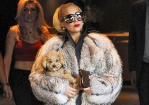 Lady Gaga Slammed For Wearing Fur