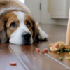2012 VW Super Bowl Ad- Dog