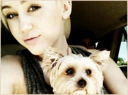 Miley Cyrus Mourns Dog's Death
