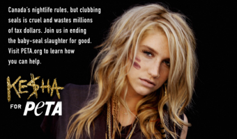 Ke$ha Does PeTA – NSFW Video
