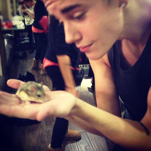 Hamster Association Accuses Justin Bieber Of Animal Abuse And Neglect